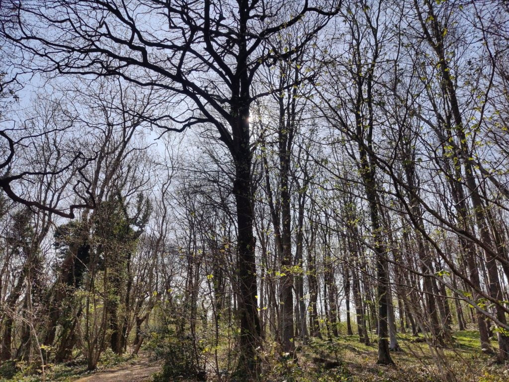 Leckwith And Dinas Powys – The Covid 19 Walks